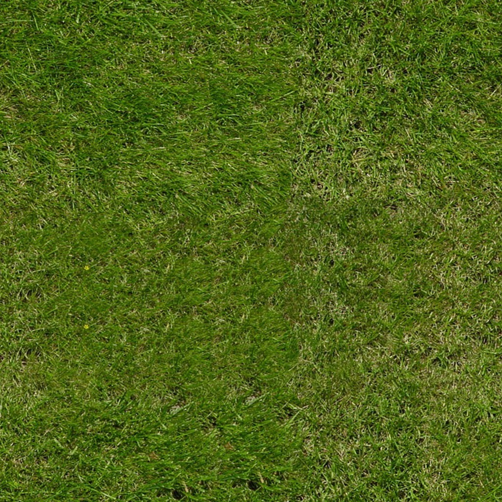 Green grass - Download Royalty Free Texture
