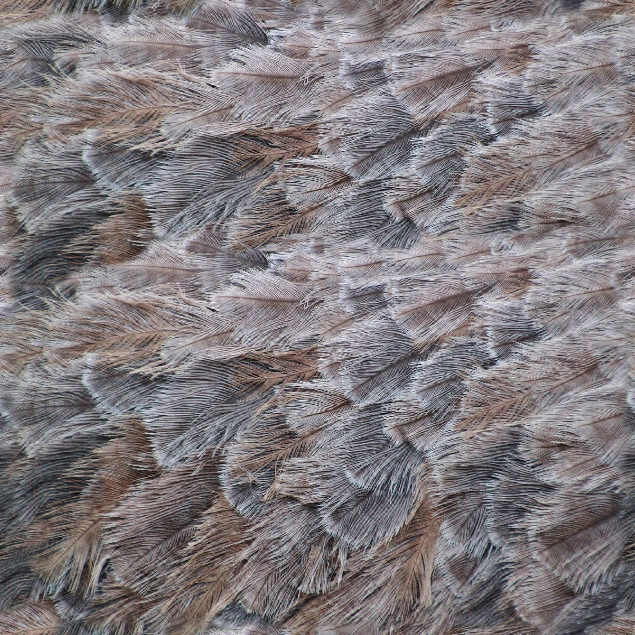 Bird Feathers Download Royalty Free Texture