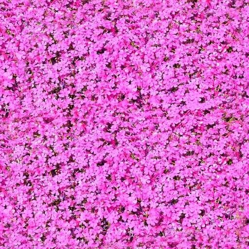 4096 x 4096 seamless pot tileable pattern flower pink Pink flowers free texture
