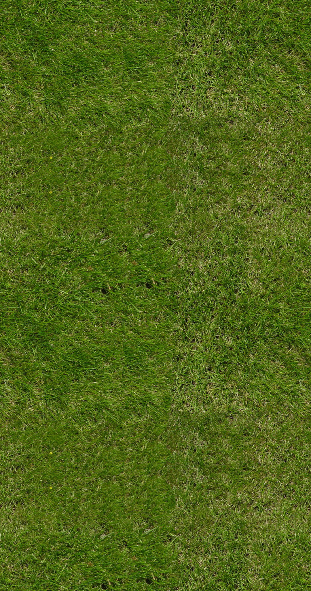 Green Grass Download Royalty Free Texture